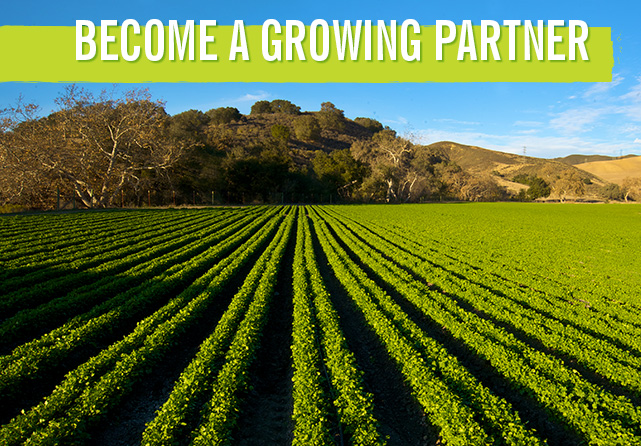 growing-partner