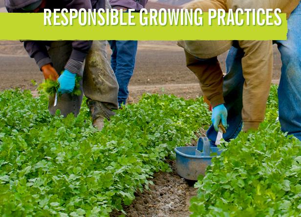 responsible-growing
