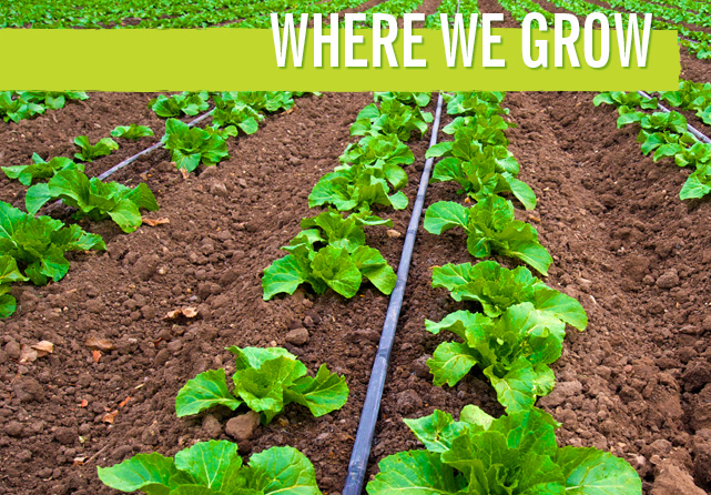 where-we-grow-main